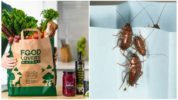 Попадание тараканов в дом с покупками