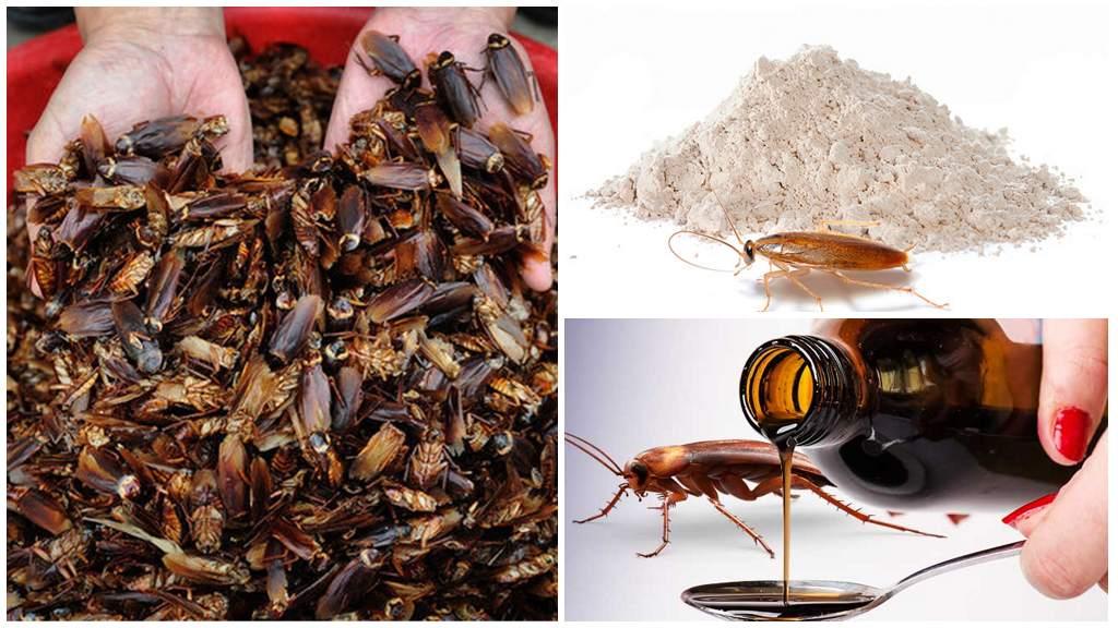 Польза тараканов в медицине