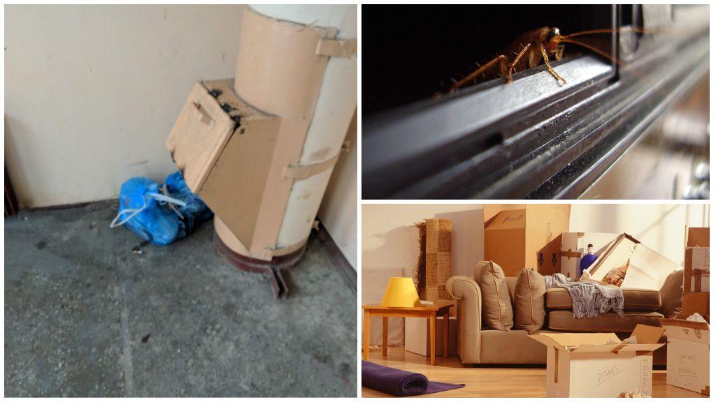 Пути проникновения тараканов в дом