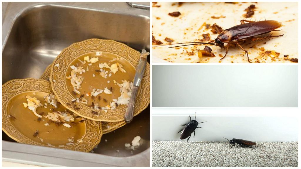 Жизнь тараканов