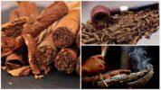 Табачный дым от тараканов