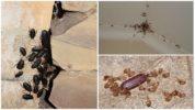 Признаки присутствия тараканов