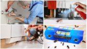 Способы борьбы с тараканами