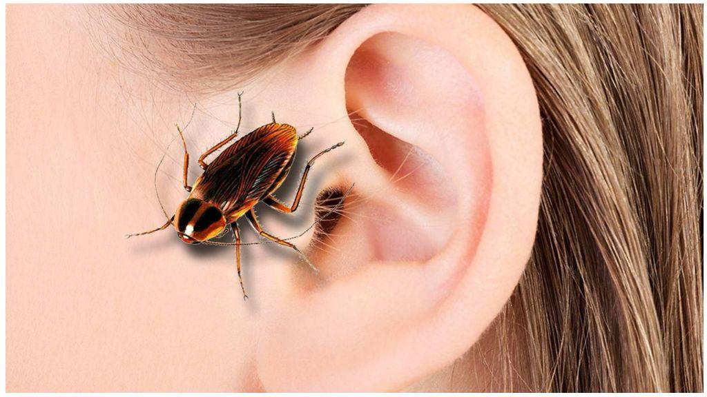Таракан в ухе: может ли такое быть и что делать при этом