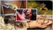 Тараканы для животных