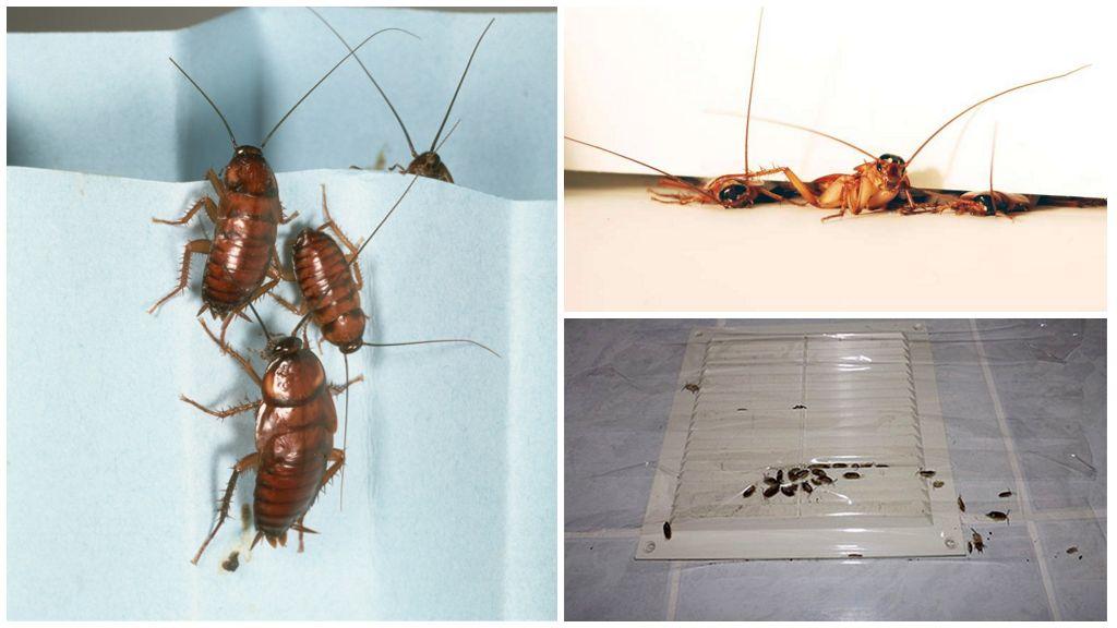 От соседей бегут тараканы: что делать и куда жаловаться