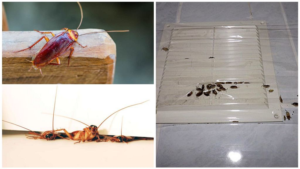 От чего заводятся тараканы в квартире