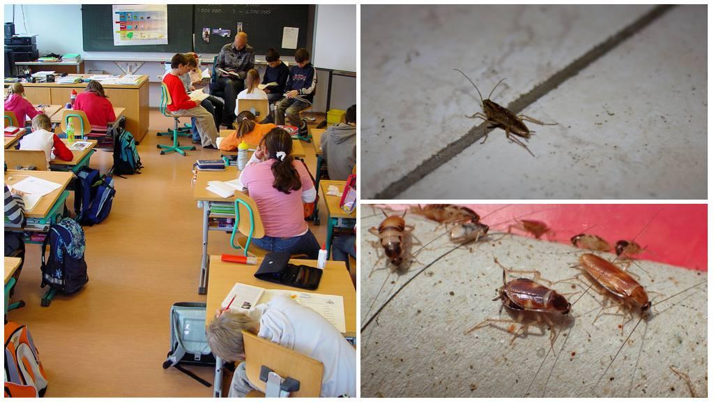 Куда обращаться, если в школе тараканы