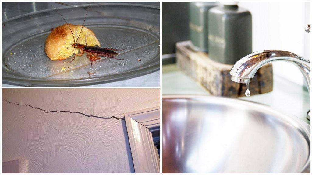 Благоприятные условия для тараканов