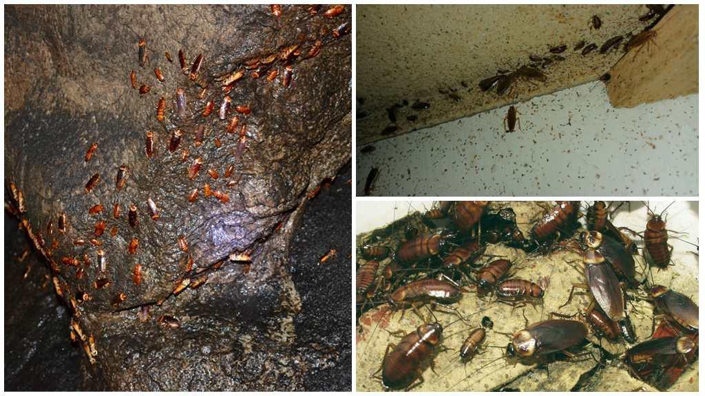 Гнезда тараканов