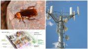 Электромагнитное излучение и тараканы