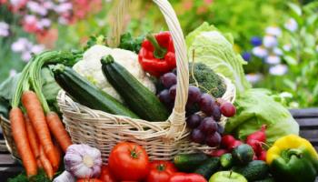 Что сажать по таблице севооборота овощей. Ценная шпаргалка худших и лучших предшественников