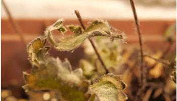 Самые страшные вредители сада и огорода: паутинный клещ — как избавиться?