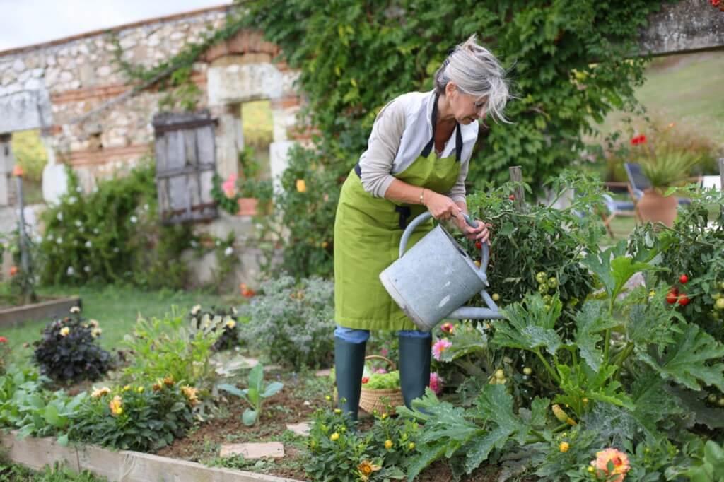 ТЕСТ: Садоводы, объединяемся! Угадаете, есть ли проблемы у растений?