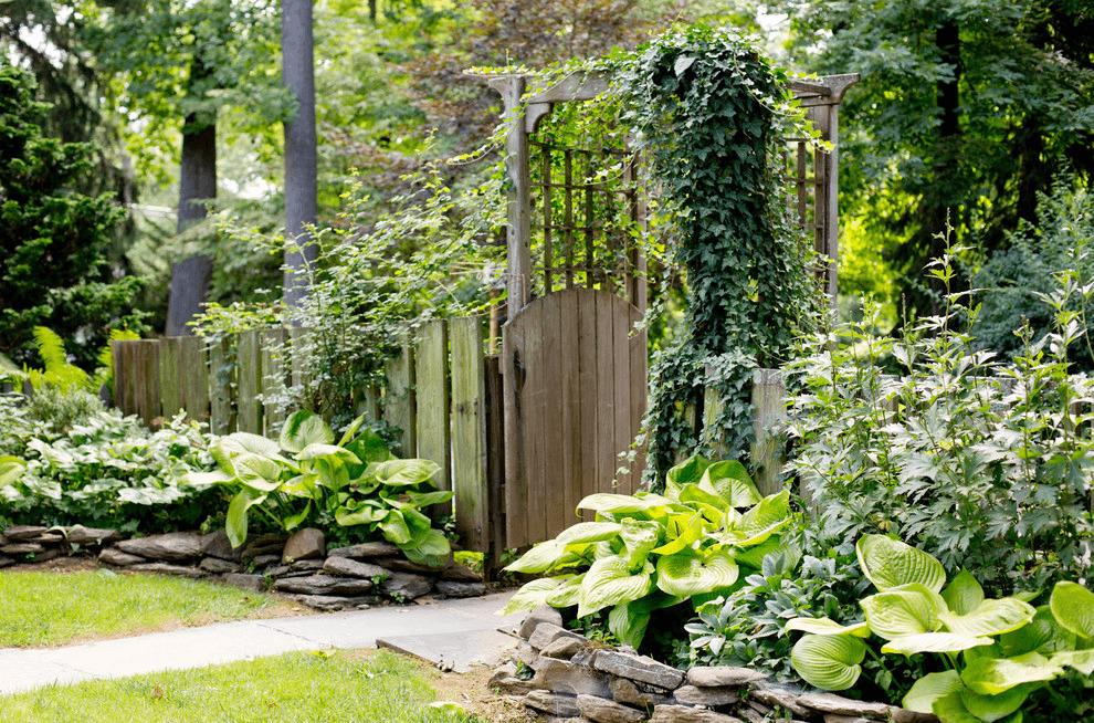 Идеи, что посадить под забором. Бонус: любители тени