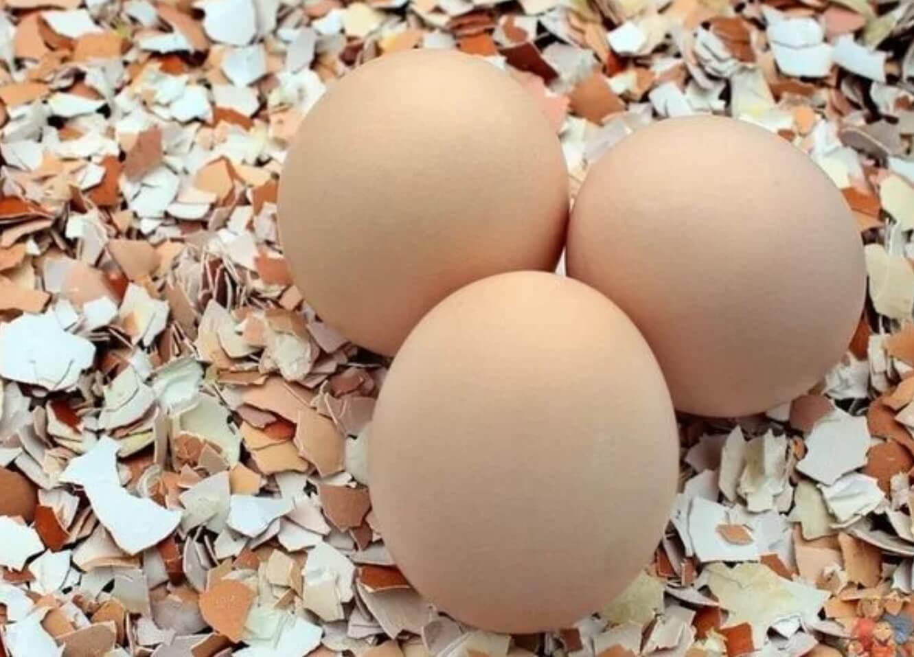 Выкидывать яичную скорлупу нельзя: это чудо-средство для сада и огорода. ТОП-5 способов.