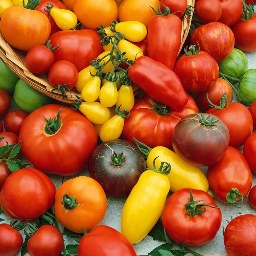 ТЕСТ: Знатоки томатов, где вы? Ответите правильно?