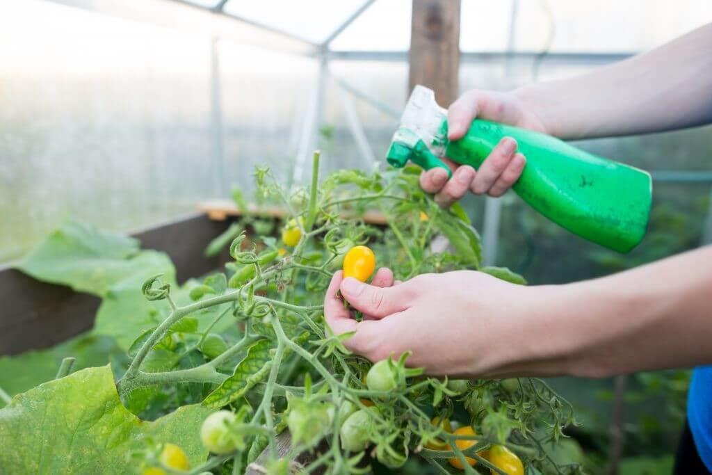 """Садово-огородная """"спасительница"""" - зеленка! Как ее правильно использовать?"""