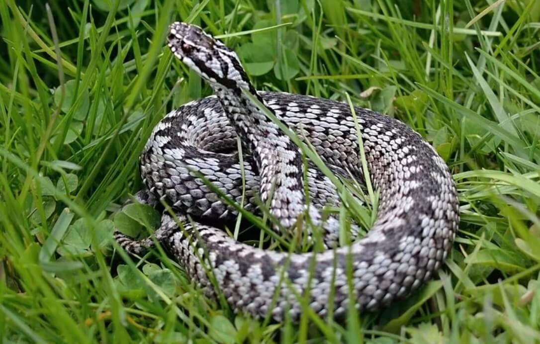 Как избежать на даче встречи со змеями: защищаем сад и огород от ползучих и изгоняем их после зимы