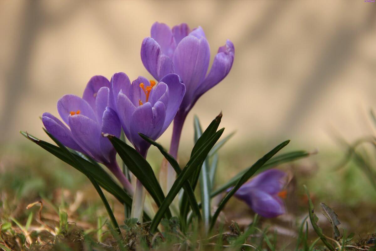 Эти растения можно принести из леса и посадить на своем участке. Часть II