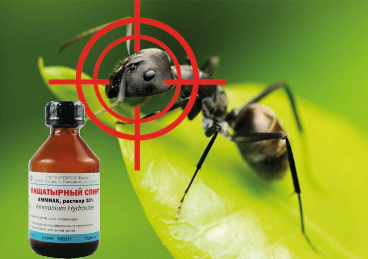 Самые эффективные способы избавиться от муравьев в теплице
