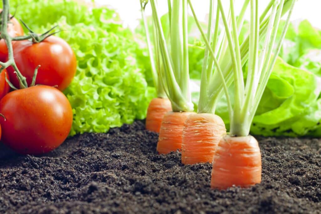 Какие овощные культуры можно сеять в грунт в июле?