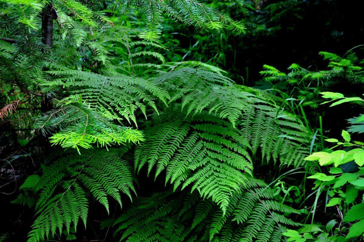 Эти растения можно принести из леса и посадить на своем участке. Часть I