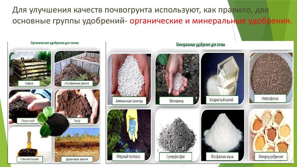 Какая подкормка лучше: дрожжи, сброженная трава или гумат?