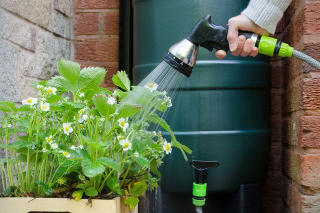 Правильно поливаем растения - получаем отличный урожай
