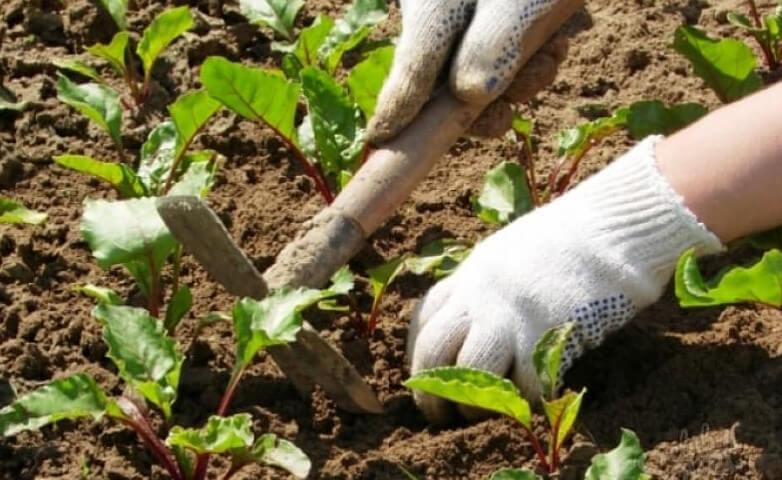 Что нужно знать о рыхлении почвы