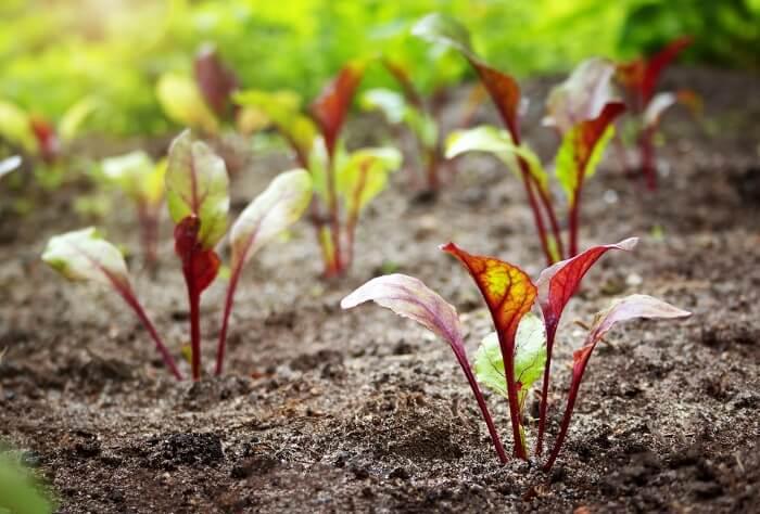 Еще есть время посеять эти овощные культуры. Спешите!