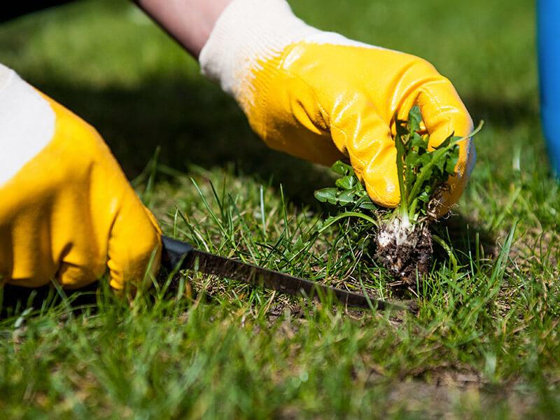 Как бороться с сорняками — самые лучшие способы
