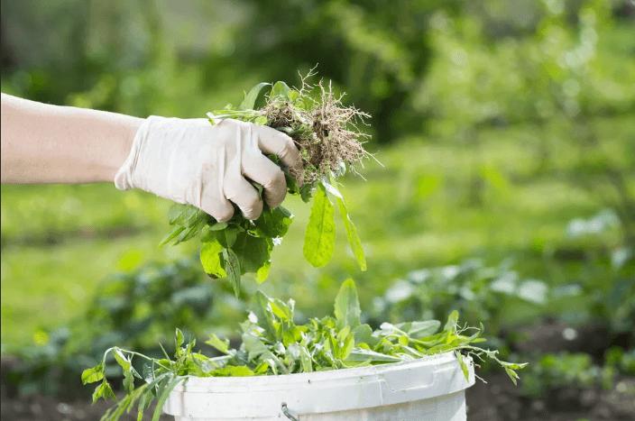 Удобрение из травы за 4 дня, или как ускорить рост посадок и спасти себя от прополки